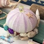【厚木】海の神秘!ウニランプ作り&ピカピカ光るどろだんご作り