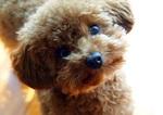 ~親子で楽しむワークショップ~犬と友達になろう!犬ともプロジェクト